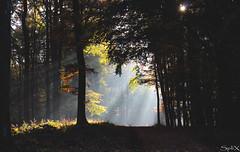 Darklight (SpliX!) Tags: canon eos 700d lainzer tiergarten wien vienna wood forrest light dark 50 fog nebel mist
