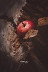Earthy tones (mirri_inc) Tags: apple tree red