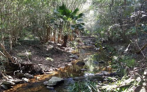 Lot 280 Cedar Hills Road, Milton NSW