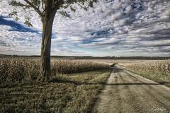 A Road In Logan County, Illinois (myoldpostcards) Tags: landscape rural country farm fields season autumn fall golden 1000th avenue ave countyroad 1000e logancounty centralillinois illinois myoldpostcards randall randy vonliski aroadinlogancountyillinois canon eos 5dmarkiv atmosphere clouds sky