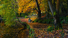 The Impressionist (SpectrumLight) Tags: nature park autumn fall beauty impressionist foliage forest tree leaves sony sonynex5n england kent painter artist painting