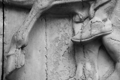 Hoof and Shoe (Phancurio) Tags: hoof shoe parthenon athens horse greece antiquity