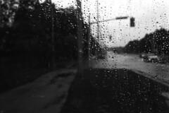Ferrania P30 Alpha Test Roll 1: Rainy Bus Shelter (pmvarsa) Tags: summer 2017 analog film 35mm 135 ferrania p30 alpha 80iso ferraniap30alpha blackandwhite bw nikkormat ftn classic camera nikon nikkor 35mmf28lens nikonsupercoolscan9000ed coolscan outside cans2s waterloo ontario canada bus stop wet road solemn down sad mood raindrops drops trafficsignal cars glass pane sidewalk rain nikkormatftn