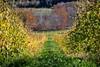 Between the vines, Benjamin Bridge, Gaspereau Valley Nova Scotia (internat) Tags: 2017 canada novascotia gaspereauvalley benjaminbridge wines winery vines aurorahdr hdr