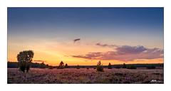 Glühender Heidehimmel - Glowing heather sky (mmsig) Tags: blau rot lünebugerheide heideblüte sonne himmel wolken canoneos80d langzeitbelichtung hdr sonnenuntergang orange violett rosa niedersachsen landschaft farbe heatherbloom color sun sunset summer sommer bloom baum gras wald feld red