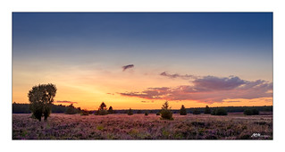 Glühender Heidehimmel - Glowing heather sky