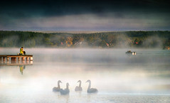 By the lake. (augustynbatko) Tags: lake fog mist water fisherman nature landscape sky trees birds swans