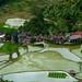 Riziéres Banaue Philippines 1030634