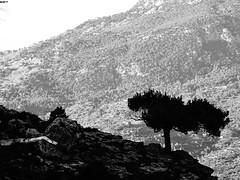 Solitude. (Ia Löfquist) Tags: tree träd mountain berg svartvitt monochrome ensamhet crete kreta vandra vandring hike hiking walk walking autumn höst wanderer wander