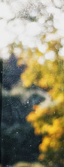 through the window (Francis Mansell) Tags: window dirtywindow bokeh tree glass abstract