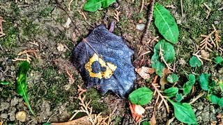 Autumn Leaf - Őszi levél