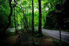 Aomori (samstandridge) Tags: japan japanese journey nihon nature forest stream road river travel trees trail tree aomori oirase sam standridge sony alpha 6000 a6000 adventure asia hike hiking honshu