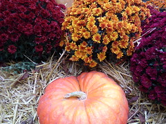 fleur Halloween pairi daiza (carolemielczarek) Tags: halloween pairidaiza