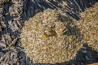 Dried fish, Zambia. Photo by Chosa Mweemba.