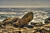 Timelessly leaning towards the ocean (lumpy79) Tags: portugal pentax pentaxk20d smcpm28mmf35 35 28mm atlantióceán atlanticocean rocks stones hdr