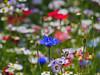 P6185571_b (PTR Images) Tags: blume blumen blumenwiese wiese flower flowers