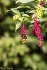 Chi conosce questa pianta? (paolotrapella) Tags: pianta plant verde green bokeh canon50mm paolotrapella red rosso smileonsaturday tinytreasuresinflora
