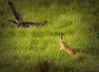 Run, Rabbit❗  Run❗ (Explored)