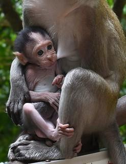 Portrait of a baby monkey