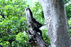 tumblr_nf2bw2rLYP1rlaykko4_540 - copia (yochicontli.crb) Tags: fotografia efímero alma vida cotidianidad