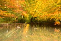 Zoom automnal (Valentin le luron) Tags: 20171020 nikon 800 e zoom automne jaune gingins la cote vaud romandie suisse paysage forêt étang feuille reflet