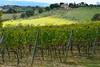 En Toscane (Hélène Quintaine) Tags: vigne olivier paysage nature toscane italie sangimignano maison poteau piquet bois vert jaune colline rang