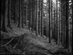 IMG_20171020_0002 (Filmphotographic98) Tags: film photography medium format shootfilm forestry trees woodland ferns tunnel bristol somerset
