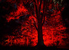Forest fire. (Ayoub X) Tags: forest tree wood montreal city park lights fire burn lightening