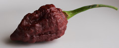 Apocalypse Scorpion Chocolate Pepper (TheChili.Life) Tags: chilli pepper chili chile pod organic gardening spicy peppers growing fruits capsicum