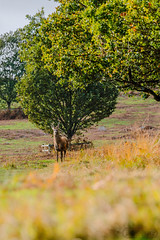 Bradgate Country Park 22nd October 2017 (boddle (Steve Hart)) Tags: stevestevenhartcoventryunitedkingdomcanon5d4 bradgate country park 22nd october 2017 steve hart boddle steven bruce wyke road wyken coventry united kingdon england great britain canon 5d mk4 6d 100400mm is usm ii 2470mm standard 815mm fisheyes lens 1635mm l wideangle wide angle wild wilds wildlife life nature natural bird birds flowers flower fungii fungus insect insects spiders butterfly moth butterflies moths creepy crawley winter spring summer autumn seasons sunset weather sun sky cloud clouds panoramic newtownlinford unitedkingdom gb