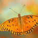 butterfly+art
