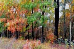 2017-10-25 Autumn Impressionism (tsegat1) Tags: autumn icm impressionism hss colorfulworldmulti