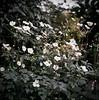 Copenaghen Botanical Gardens (Nobusuma) Tags: hasselblad500cm hasselblad zeissplanar 120 6x6 film analog mediumformat kodak kodakportra portra flowers copenaghen colorfilm ハッセルブラッド フィルム 中判写真