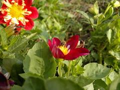 2017-08-22-10311 (vale 83) Tags: bee nokia n8 macrodreams flickrcolour colourartaward coloursplosion friends autofocus beautifulexpression