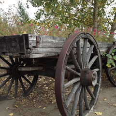 Late Delivery #autumn (Mr. Happy Face - Peace :)) Tags: spokes flowers wagon pioneer htt albertabound canada gardening autumn fall art2017