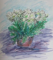 white chrysanths (MaggyN (trying to catch up!)) Tags: sketch drawing painting flowers
