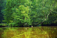 summer moods (JoannaRB2009) Tags: summer mood pond green tree trees park reflections swans water birds animals island nature landscape view dolinabaryczy dolnyśląsk lowersilesia polska poland