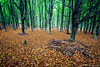 (Hugo Camara) Tags: hugocamara madeiraisland madeira portugal indurotripod canoneos5dmarkiii