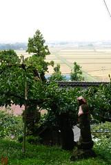 DSC_3906-37 (zunsanzunsan) Tags: 東平田 生石 生石神社 神社 秋 酒田市