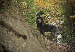 Nasco (bulbocode909) Tags: chiens nature forêts automne valais suisse montagnes