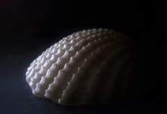 ((( (vriesia2) Tags: macromondays macro theme sidelit light shell lowkey