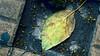 hoja solitaria en el mundo moderno (ojoadicto) Tags: hoja leaf baldosas piso sola inclinada artisticphotography