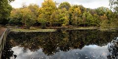 Burnham Beeches (jameslf) Tags: burnham beeches berkshire buckinghamshire slough trees pond reflection lakes lake autumn