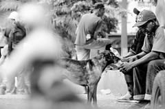Foto- Arô Ribeiro -6002 (Arô Ribeiro) Tags: pb blackwhitephotos photography laphotographie art brazil dog street arôribeiro