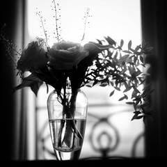 flower/花 (s_inagaki) Tags: flower tokyo snap monochrome blackandwhite bnw bw jupiter850mmf2 花 東京 スナップ モノクロ 白黒