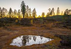 Sunset over the marsh (harald.bohn) Tags: samsjøen myr fjelltur dam pytt tjønn fjellet mr myrterreng fjellskog