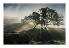 Someplace in the Peaks 20 May 2017 (Matthew Dartford) Tags: matthewdartford atmospheric backlight backlit bokeh branch breakinglight creapy depth fog foggy forest glow goldenhour happisburgh landscape mess mist misty morning morninglight peakdistrict sidelight silhouette spooky sunrise tangled tree trees trunk twisted uk valley wide wood woodland woods