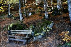 Mélancolie autour du Lac Pavin (marie_soleil_63) Tags: lac lake auvergne sancy banc bench forest automne autumn melancolie