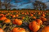Oh my Gourd. (bainebiker) Tags: pumpkin gourd vegetable farm crops sky clouds trees agriculture hdr canonef24mmf14liiusm autumn