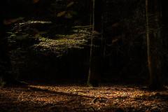 Zonnestraaltje (Bram Meijer) Tags: kootwijkerzand kootwijk bos woods forest wald bomen trees zonlicht sunrays herfst herbst autumn automne sunlight